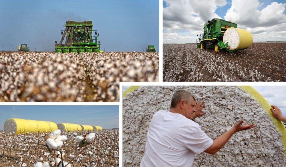 Producciones agrícolas de vanguardia