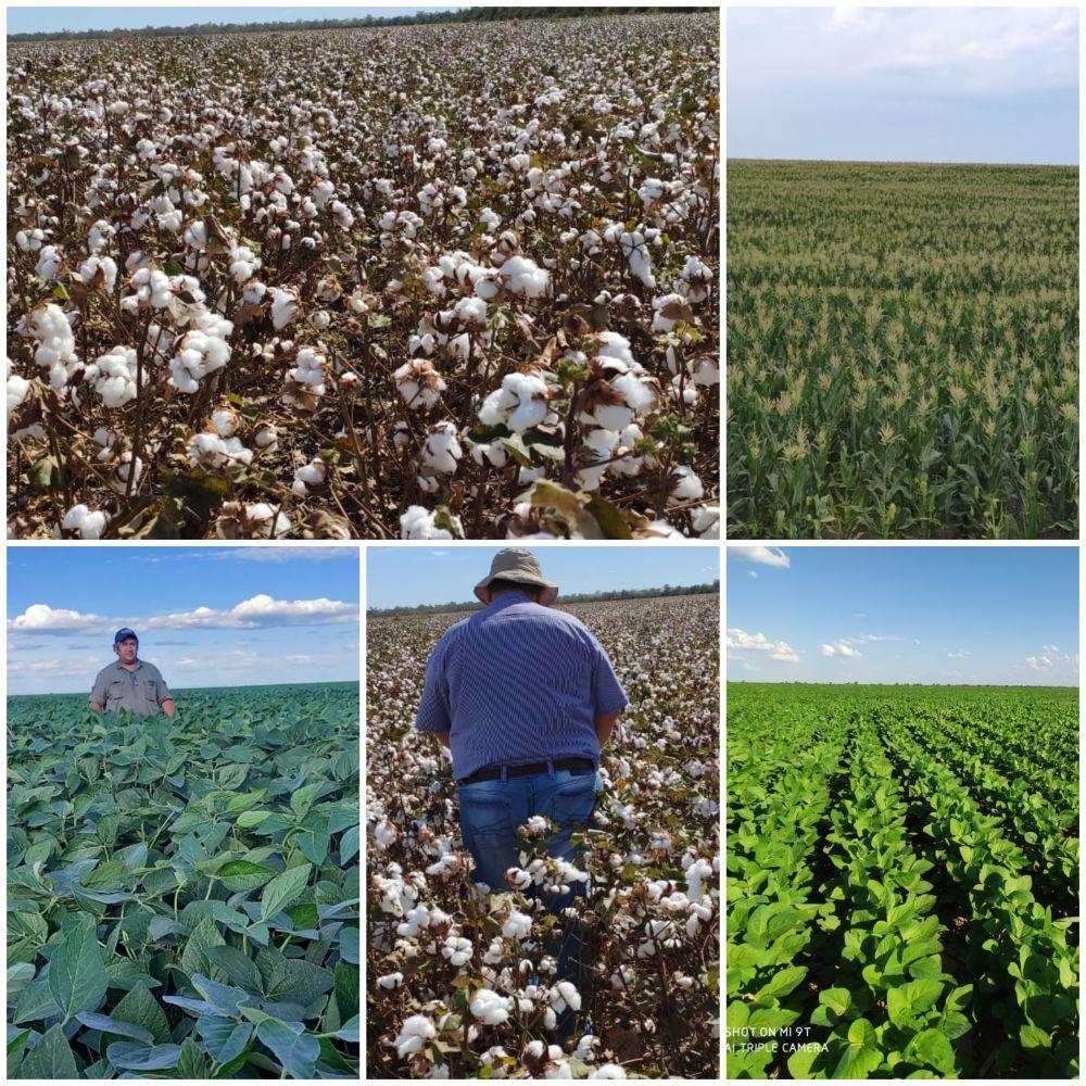 Agro Cotton liderando y rompiendo paradigmas en el oeste formoseño
